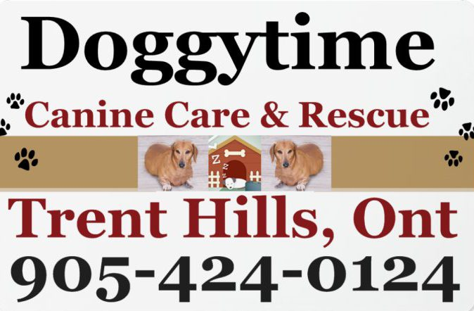 DOGGYTIME  ~  Canine Care & Rescue