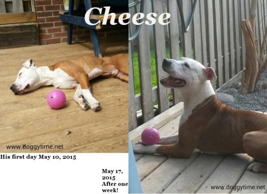 FB PB HVW KLAWS TA PAWS TWT cheese may 10 & may 17