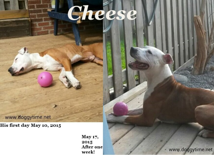 FB PB HVW KLAWS TA PAWS TWT cheese may 10 & may 17
