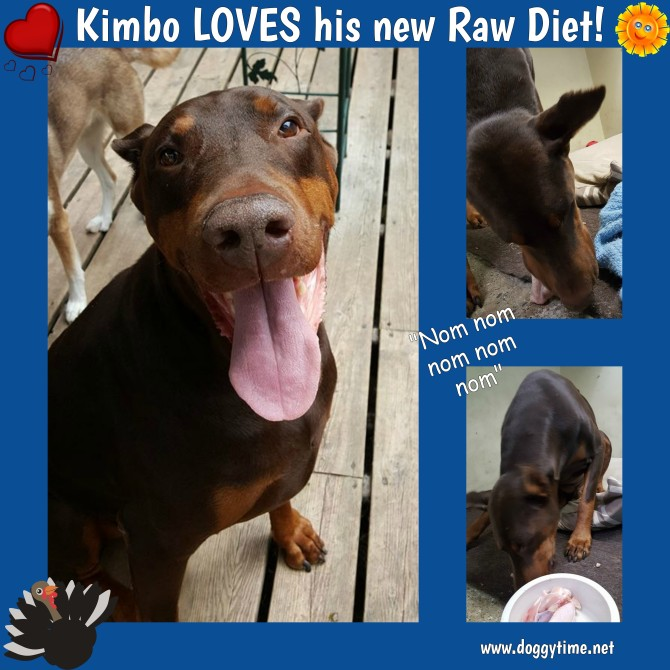 Kimbo loves his raw aug 2017