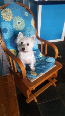 SCRUFFY ~ I HAVE CLAIMED THIS ROCKER SO IF YOU MUST SIT, PLEASE PUT ME ON YOUR LAP!