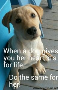 FB CM daisy gives her heart web