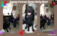 MOLLY BLUE and her FUREVER DAD!