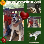 Jack Adopted into the home of his dreams!