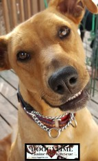 LINA ♥ Rescued by Canine Haven Graduated from our DCEC and Adopted Dec 2017