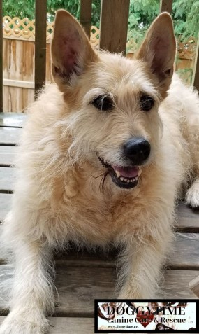 ANGEL CAKE ♥ Rescued July 2015 Now a permanent Doggytime member ♥