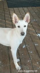 BAMBI ♥ Rescued by From My Heart Rescue and cared for by Doggytime until Adopted in 2015
