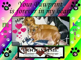 MAX and KALI ♥♥ Kali joined our family in 2002 and Max adopted us in 2003. Both went to Heaven in 2013 and we miss them dearly ♥♥
