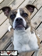 EMMY ♥ (formerly Layla) Rescued by Canine Haven Dec 2018 and cared for by Doggytime until Adopted Feb 2019