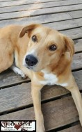 DORIS ♥ Rescued by Canine Haven Graduated from our DCEC and Adopted Oct 2017