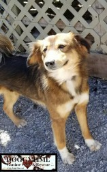 BELLA ♥ Rescued by Canine Haven Graduated from our DCEC and Adopted July 2018