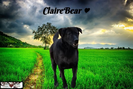 CLAIREBEAR ♥ Rescued Jan 2016 and became a treasured Doggytime family member