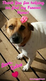 MISS COLAS ♥ Rescued by Just Paws Graduated from our DCEC and Adopted Mar 2017