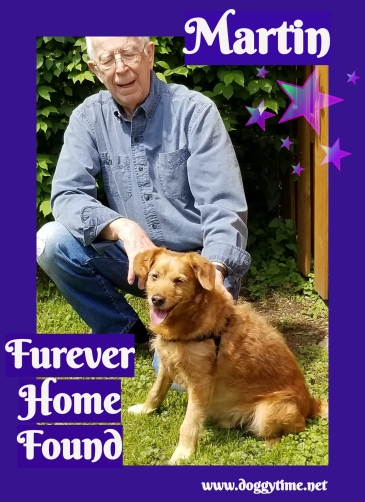 MARTIN ♥ Rescued Apr 2018 Found Dream Home Jun 2018