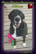 ATTICUS ♥ (formerly Oreo) Rescued and Adopted 2015