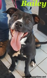 BAILEY ♥ Rescued Dec 2017 Adopted Apr 2018