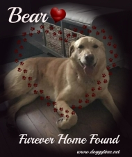 BEAR ♥ Rescued Nov 2017 Dream Home found Apr 2018