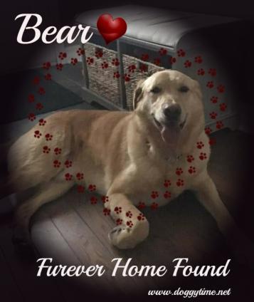 BEAR ♥ Rescued Nov 2017 Dream Home found Apr 2018