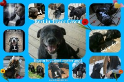 CASCA ♥♥♥ Now in Heaven ♥ Rescued Oct 2017 and became a cherished part of our family ♥