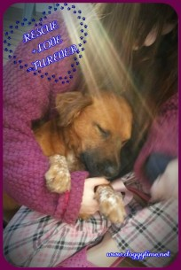 DAPHNE ♥ Rescued by Just Paws Graduated from our DCEC and Adopted Nov 2016