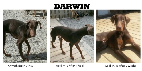 DARWIN ♥ Rescued and Adopted in 2015 after getting him healthy