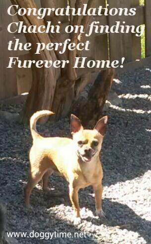 CHACHI ♥ Rescued by Team Chelsea, cared for by Doggytime and Adopted in 2015