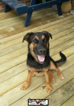 DEMI ♥ Rescued by From My Heart Rescue and cared for by Doggytime until Adopted in 2014