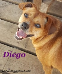 DIEGO ♥ Rescued by Save Me Rescue Graduated from our DCEC and Adopted May 2018