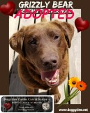 GRIZZLY BEAR ♥ Rescued Apr 2018 Dream Home found Jun 2018