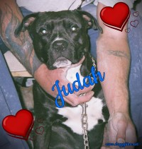 JUDAH ♥ Rescued and Adopted 2009