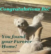 BO ♥ Rescued by From My Heart Rescue and cared for by Doggytime until Adopted in 2015