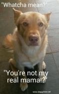 FLASH ♥ Rescued by From My Heart Rescue and cared for by Doggytime until Adopted in 2015