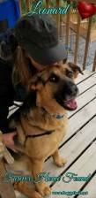 LEONARD ♥ (formerly Chase) Rescued Mar 2017 F♥rever Home found Apr 2018