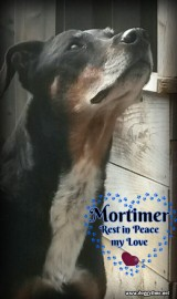 MORTIMER ♥♥♥ Now in Heaven since July 2016♥ Rescued June 2014 and became a treasured part of our family ♥