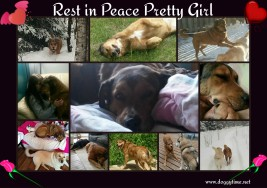 PRETTY GIRL ♥♥♥ Now in Heaven since Feb 2018♥ Rescued Aug 2013 and adopted us as her family ♥