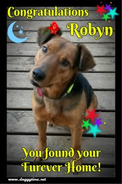MISS ROBYN ♥ Rescued by Just Paws Graduated from our DCEC and Adopted Jan 2017