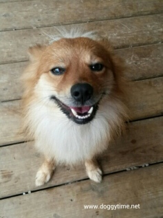 FOX ♥ Rescued Sept 2014 Adopted Oct 2014