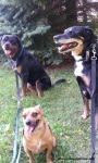 happy walk with hope carlos and morty summer 2015