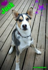 JACK ♥ Rescued Feb 2017 Adopted July 2017