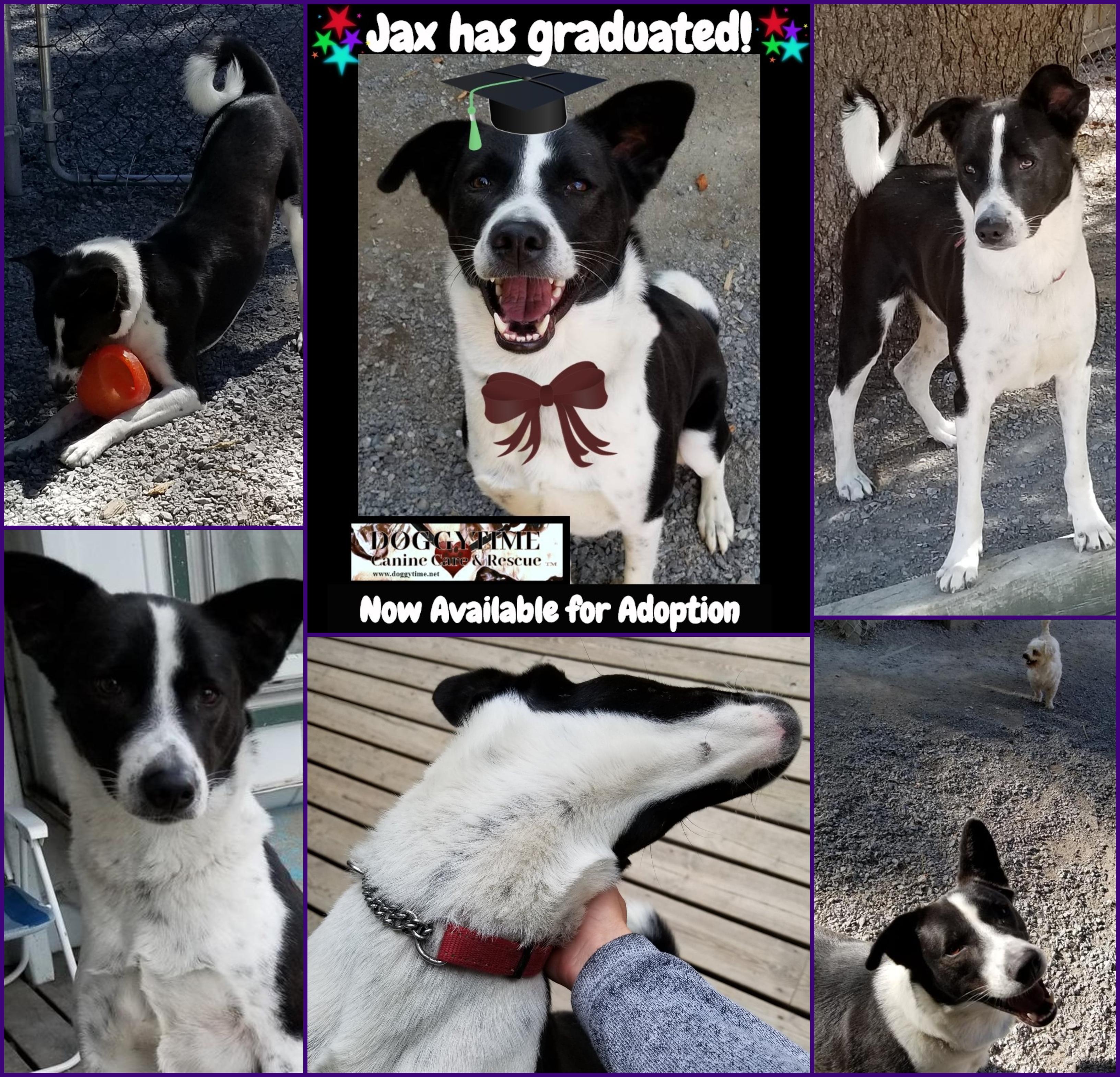 ♥ JAX'S DREAM ♥ | DOGGYTIME ~ Canine Care & Rescue™ ♥