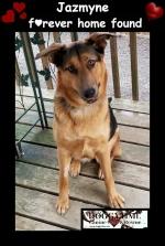 JAZMYNE ♥ Rescued Sept 2018 Adopted Feb 2019