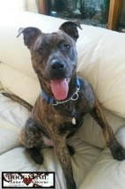 CRASH ♥ Rescued Aug 2015 and melted our hearts ♥ Has become a permanent furry family member