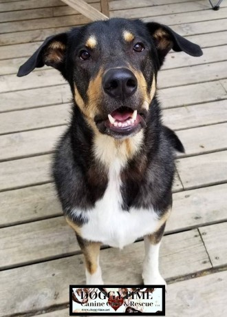ZUKO ♥ Rescued by Paws Across the Water Graduated from our DCEC and Adopted Jan 2019